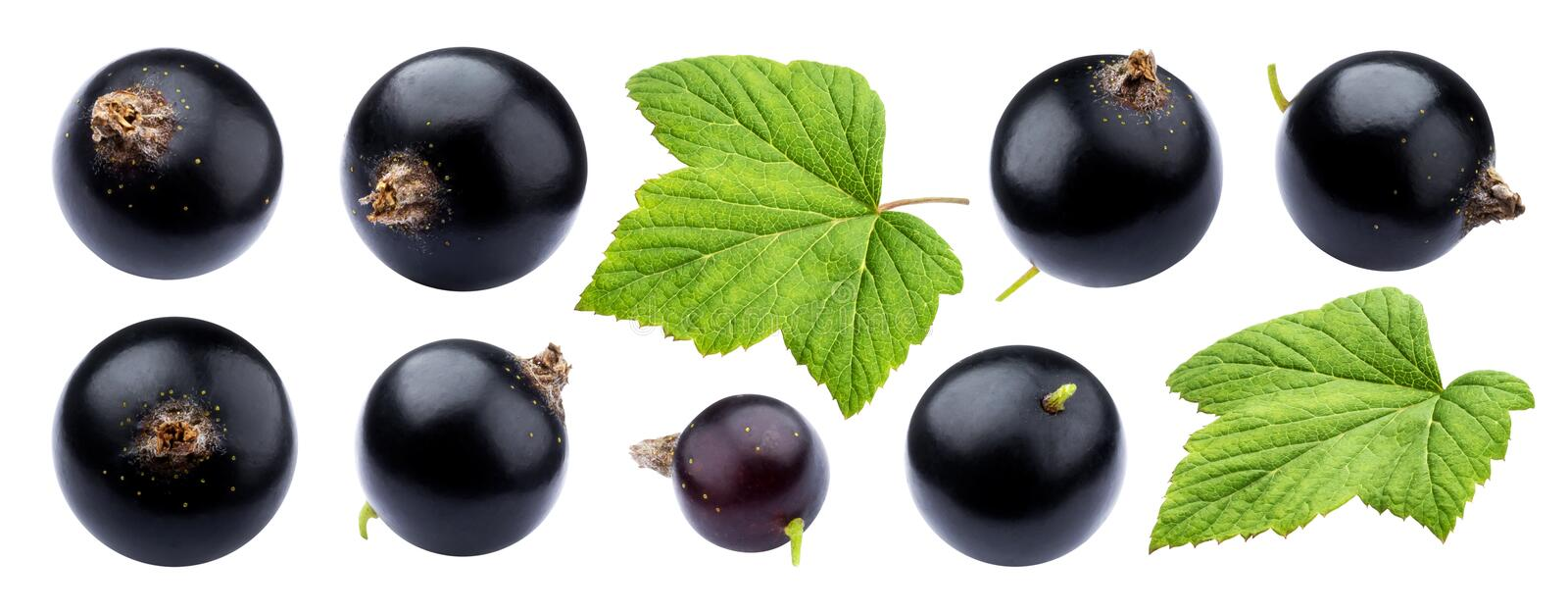 Black currant on white background royalty free stock photography