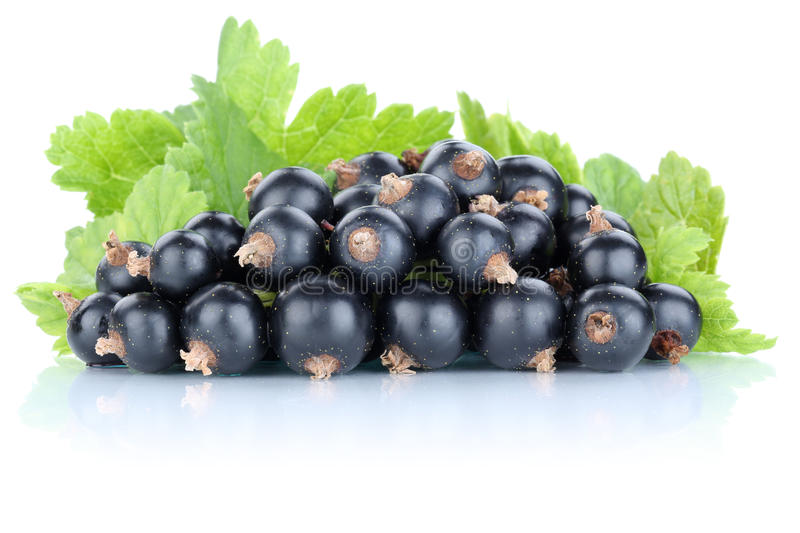 Black currant currants berries fresh fruits fruit isolated on wh royalty free stock photography
