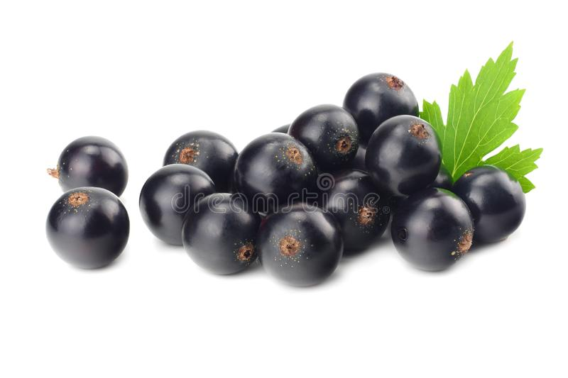 Black currant with green leaf isolated on white background. macro royalty free stock photography
