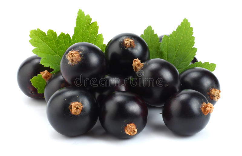 Black currant with green leaf isolated on white background macro stock photos