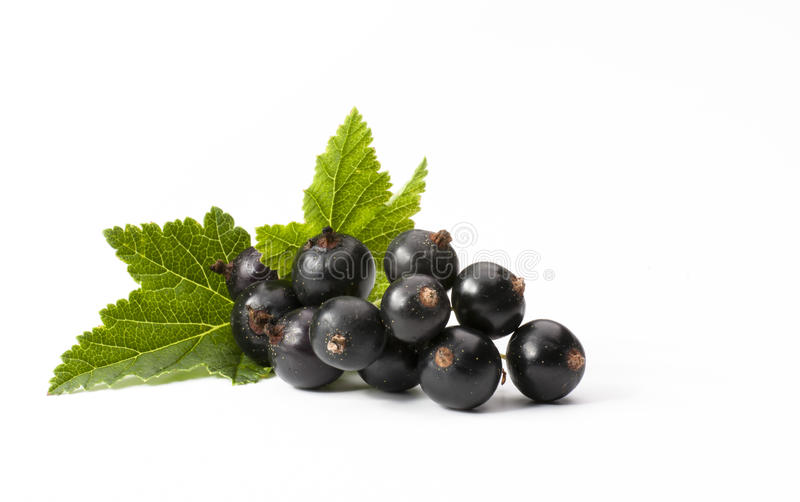 Black Currant Isolated On White Background royalty free stock image