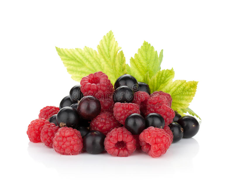 Black currant and raspberry royalty free stock photography