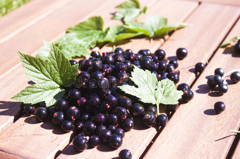 Black currant ribes nigrum. A pile of tasty black currant and green ribes nigrum leaves stock photo