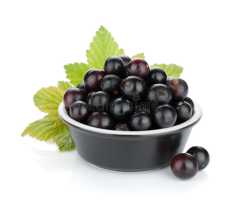 Black currant in small bowl royalty free stock image