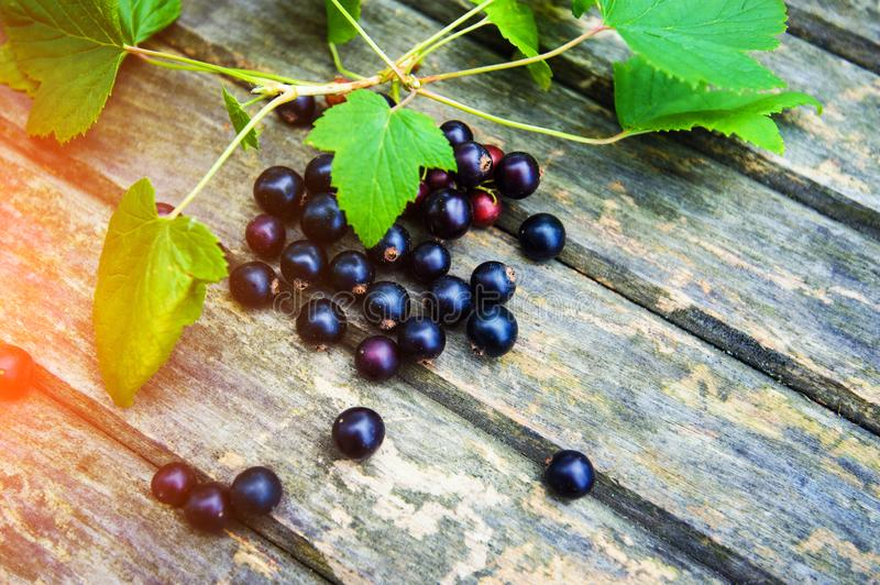 black currant on a wooden background stock photo