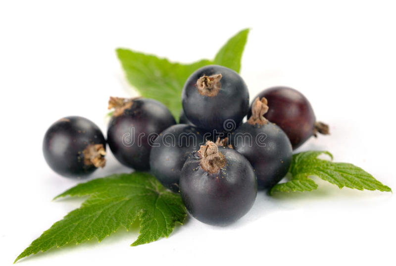 Download Black currants with leaves stock photo. Image of currant - 31779942
