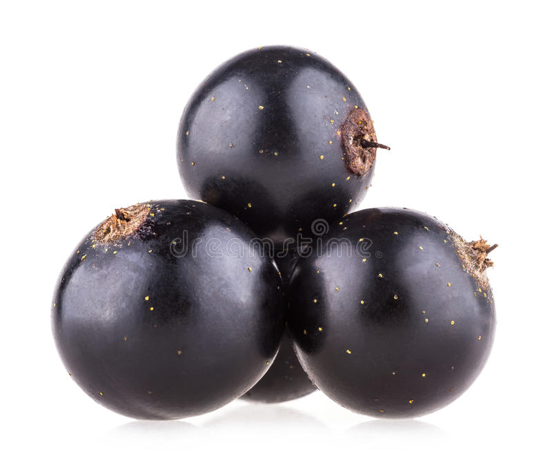Black currants. On white background stock images