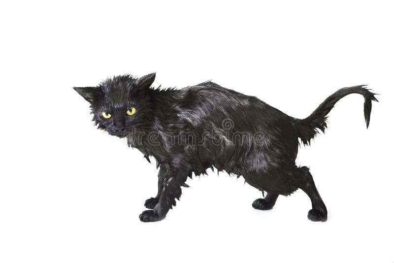 Black Cute Soggy Cat after a Bath, Funny Little Demon stock photos
