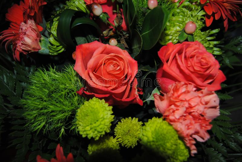 Black, dark green, light green, texture, pink, roses, flowers, greenery, blossoms, blooming, fresh, pleasant, aromatic, d. royalty free stock photography
