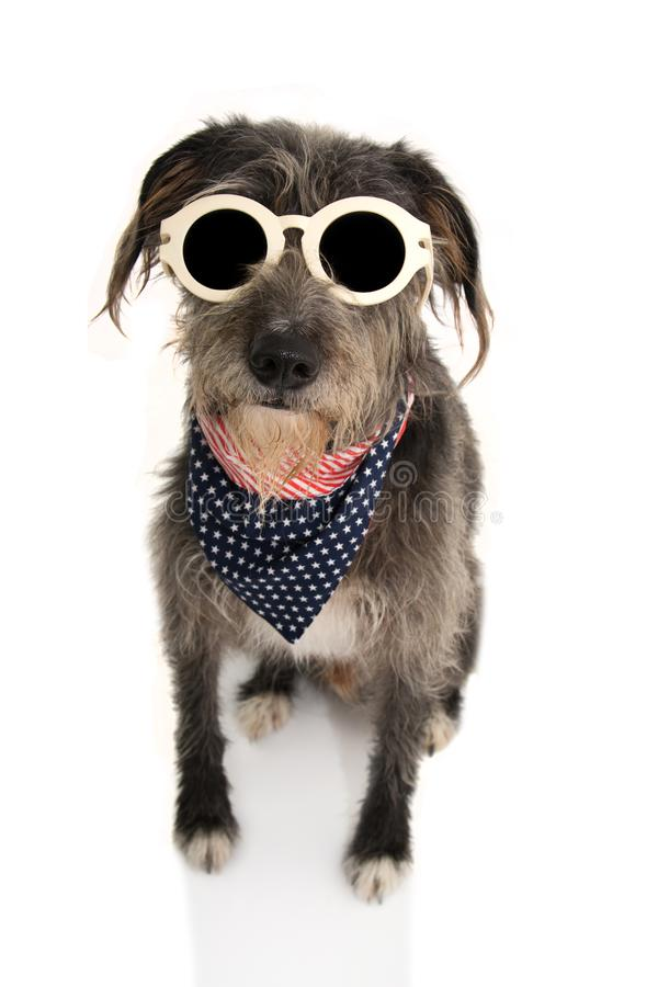 BLACK DOG WITH AMERICAN FLAG BANDANA AND VINTAGE GLASSES. ISOLATED STUDIO SHOT ON WHITE BACKGROUND. INDEPENDENCE  DAY 4TH OF JULY. BLACK DOG WITH AMERICAN FLAG stock photo