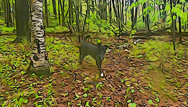 Black dog and birch tree in forest royalty free stock image