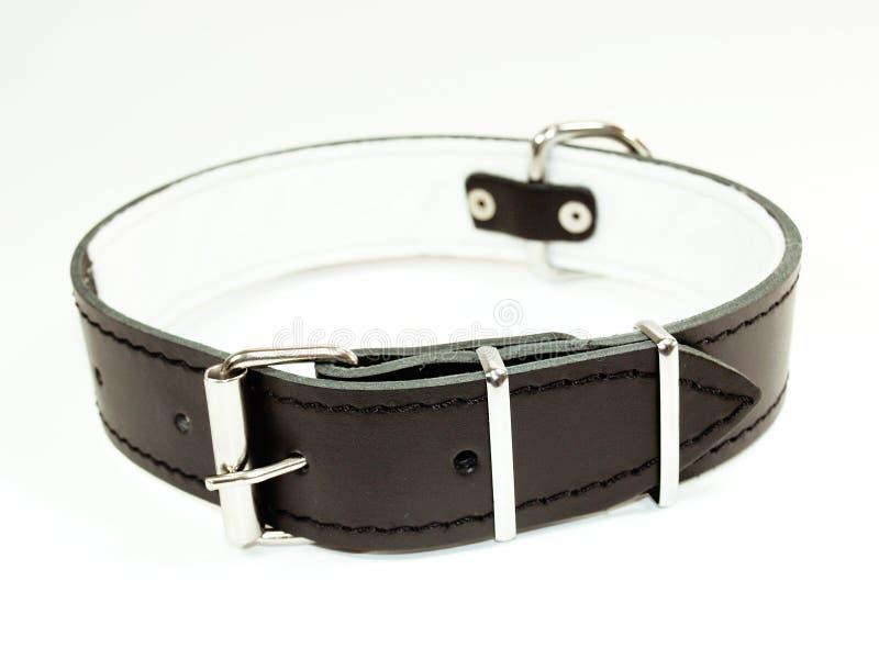 Black dog collar royalty free stock photos