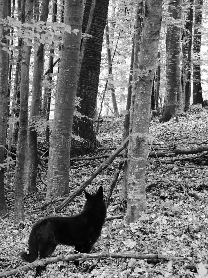 Black dog in forest stock photo