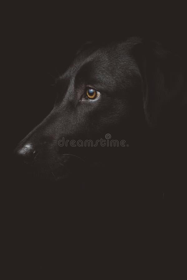 Black, Dog Like Mammal, Black And White, Dog stock photo