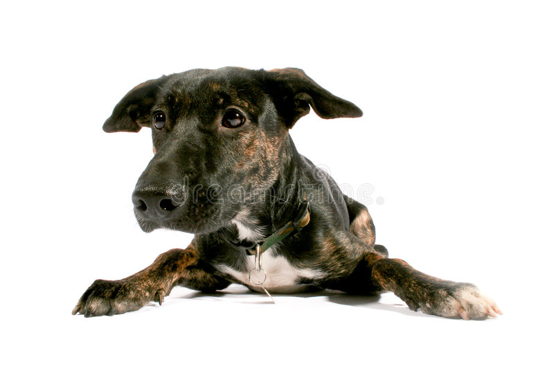Black dog looking sad II royalty free stock images