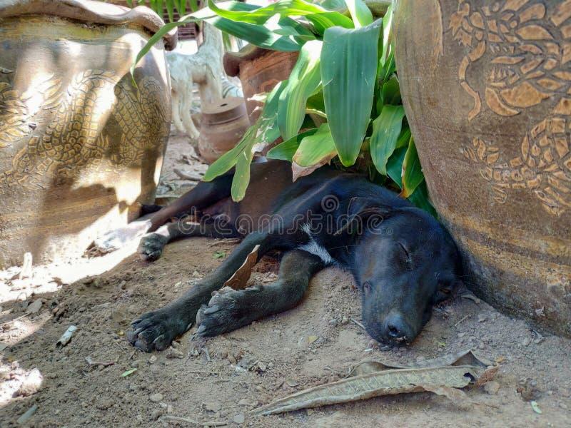 A black dog lying near a plant pot stock photography