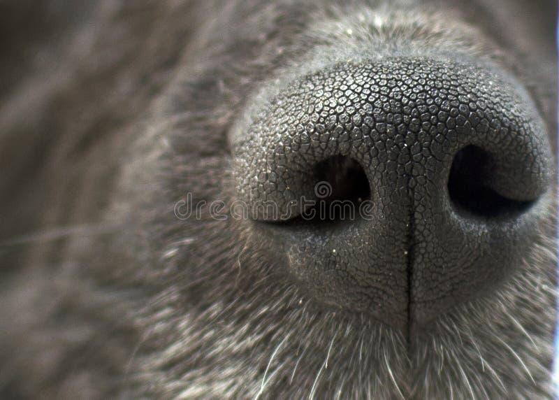 Black Dog Nose Texture royalty free stock photos