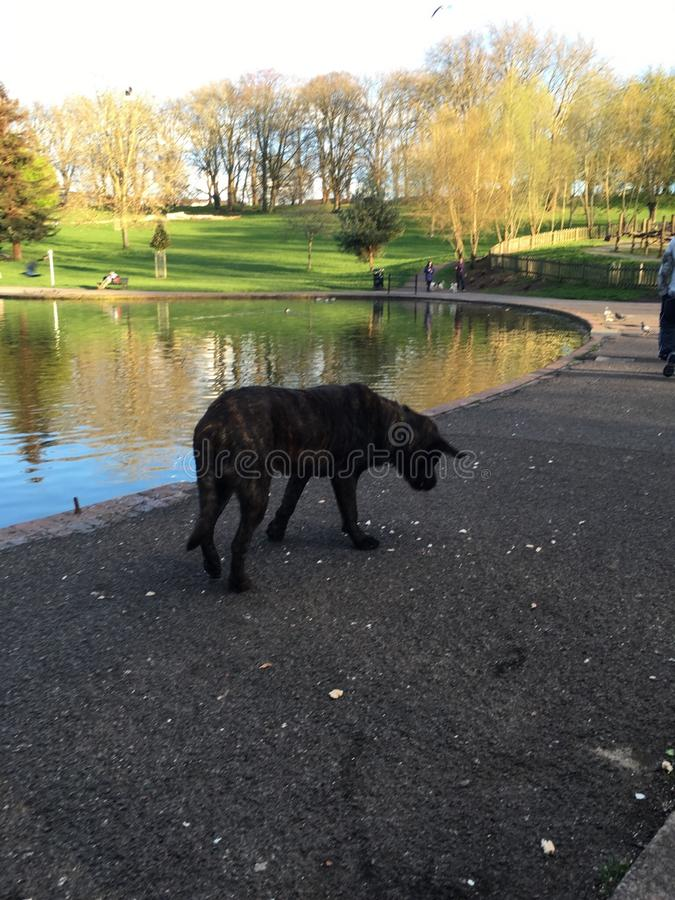 Black dog in the park stock photo