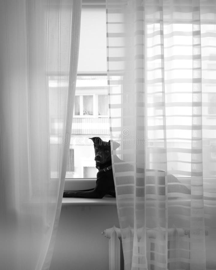 Pretty and lovely adopted dog as a model on windowsill royalty free stock images