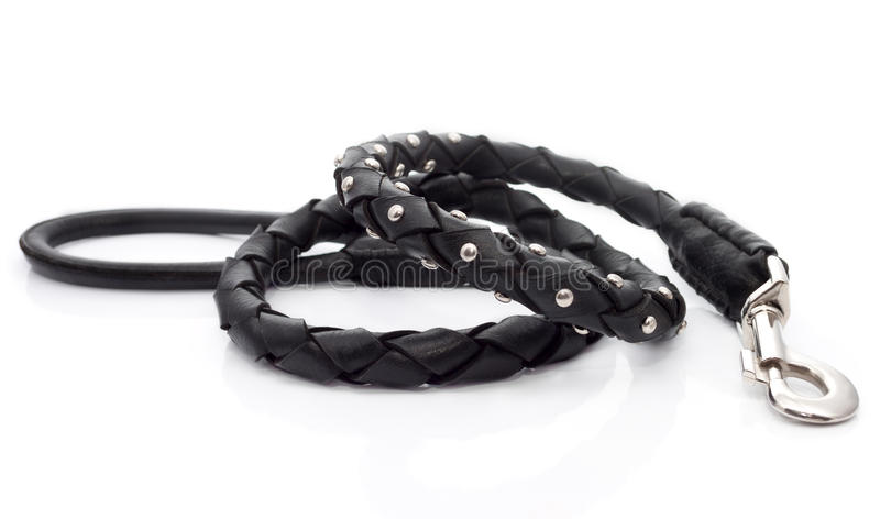 The dog's leash on the white background stock image