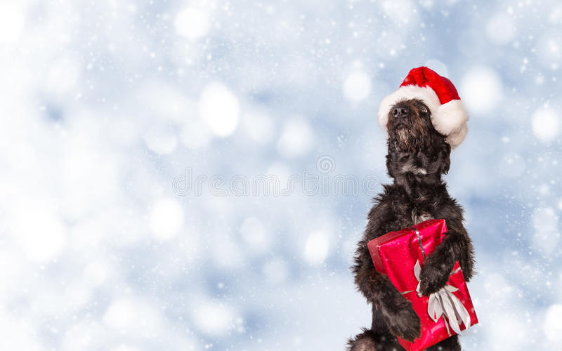 Black dog in santa outfit. royalty free stock photography