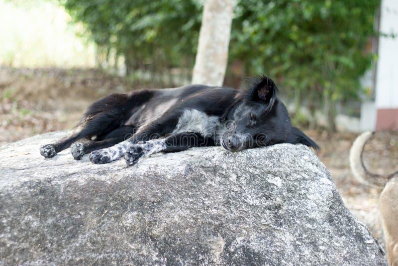 Black dog sleep. royalty free stock images