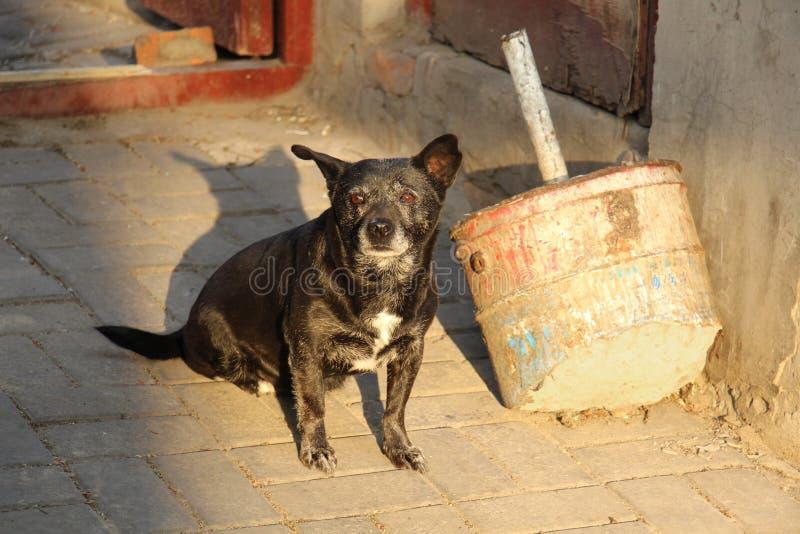 A black dog. stock photo