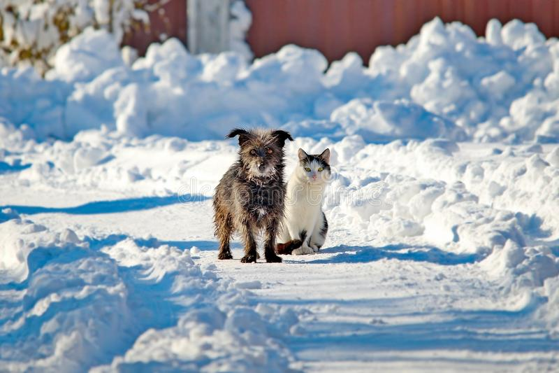 A black dog and a white cat are sitting together on a snowy street. The concept of friendship, love and family royalty free stock photos
