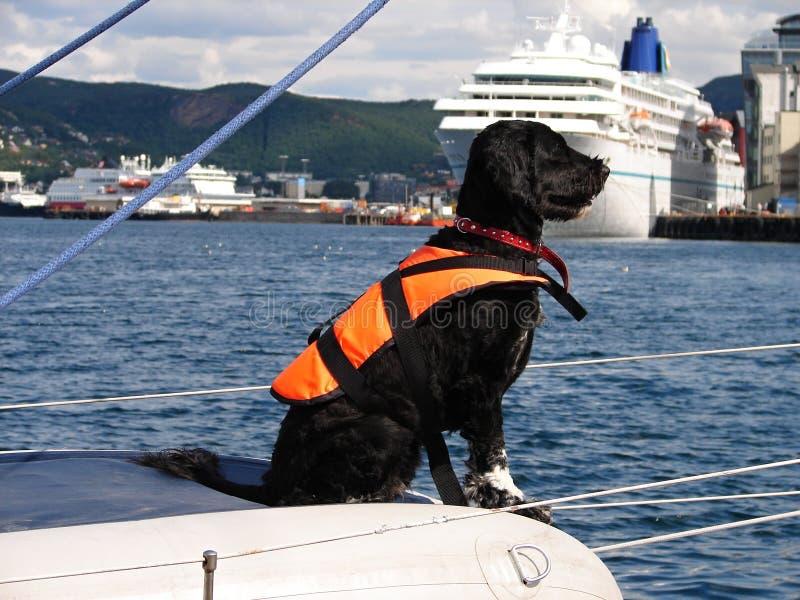 Black dog wih life jacket on sail boat. In harbor Bodo, Norway royalty free stock photos