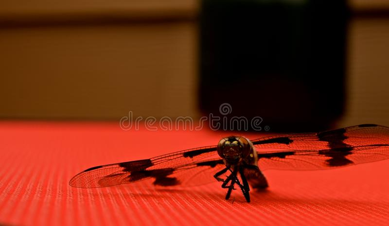 Black Dragonfly on Red Table. Close ups of a black dragonfly on a red table cloth, showing the intricate wing patterns. They are symbols of courage, strength and royalty free stock photos