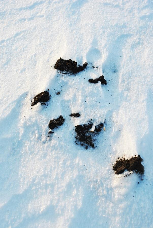 Black earth cowered with white snow, winter landscape detail, natural abstract background, close up royalty free stock image
