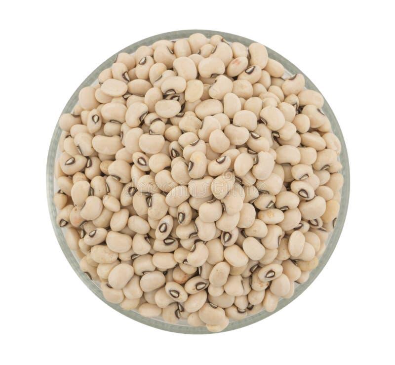 Black-eyed Beans. Group of fresh Black-eyed Beans stock photography