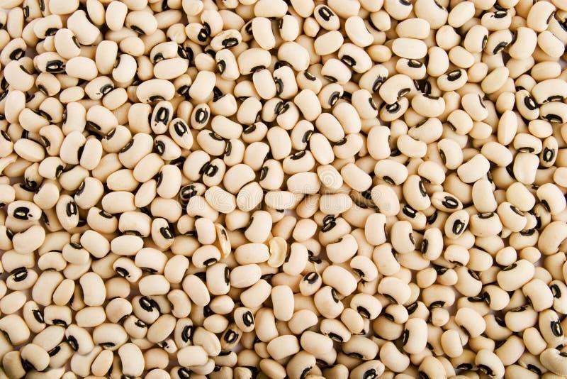 Black Eyed Peas stock foto