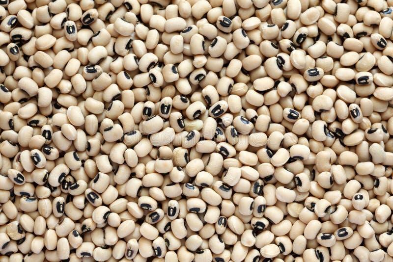 Black eyed peas. Background. Close-up stock image