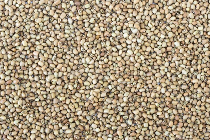 Black eyed peas. Dried raw black-eyed peas (lobia) spread as background stock image