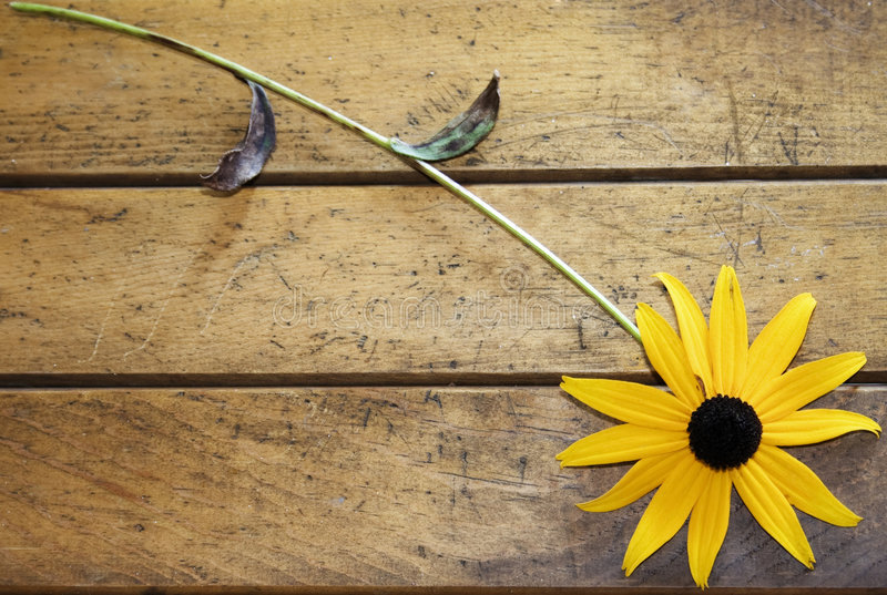 Download Black-eyed Susan stock photo. Image of country, primitive - 6381792