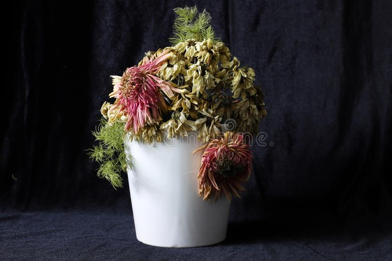 Black fabric background, withered or dead flowers. in white vase stock photos
