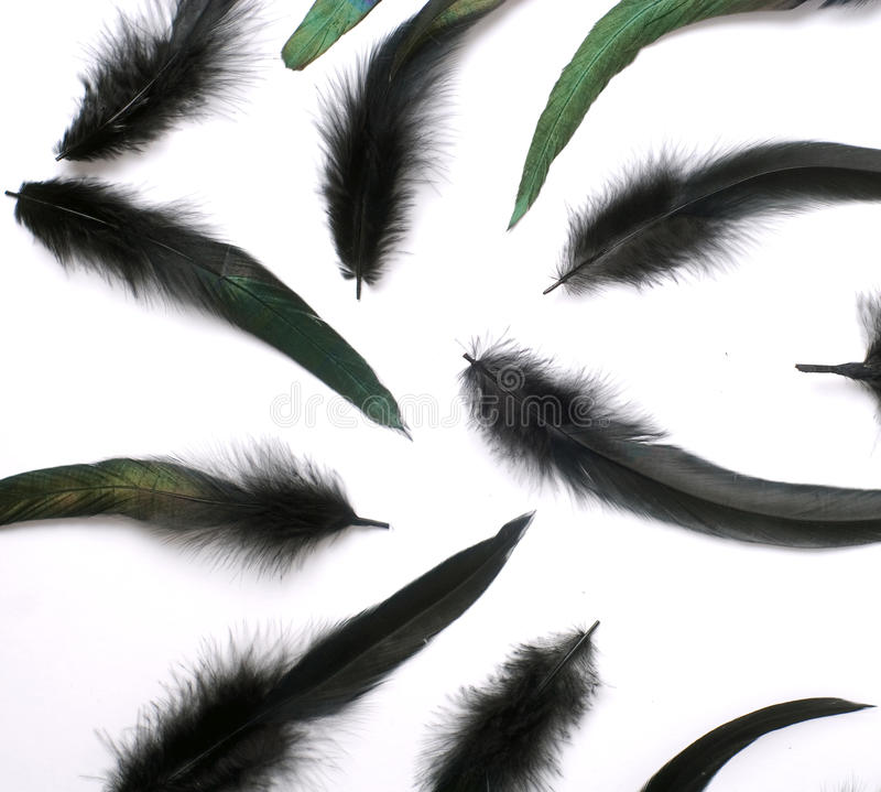 Black feather royalty free stock photo