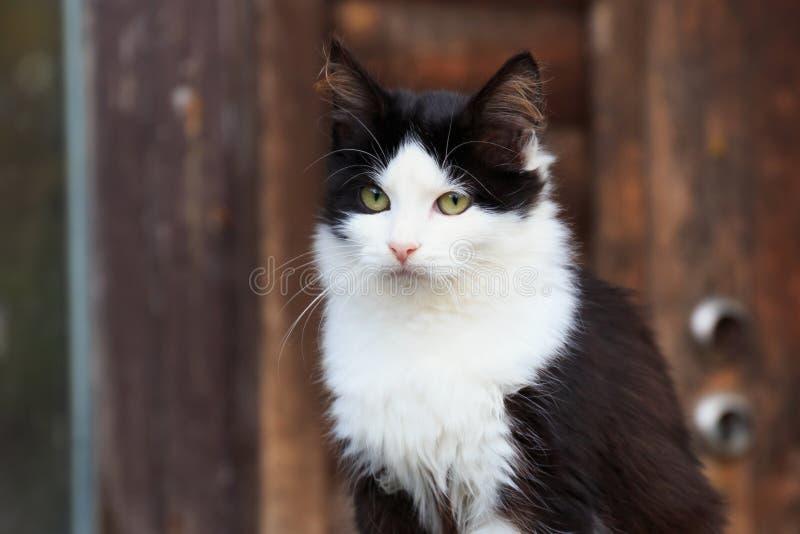 black feline white стоковые изображения rf