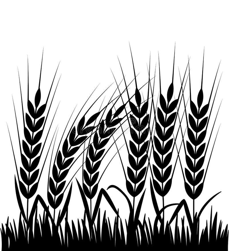 Corn Field Silhouette Stock Illustrations – 1,412 Corn ...   Cornfield Silhouette
