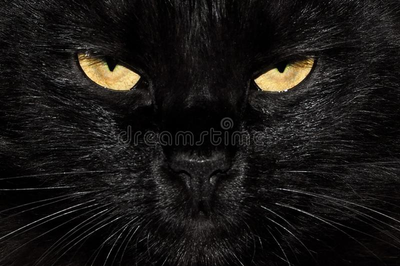 Black fluffy cat eyes close up royalty free stock photography