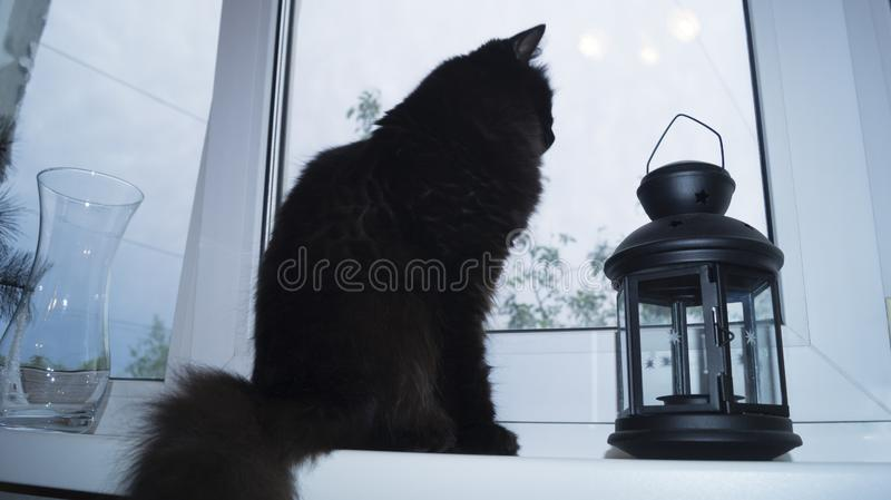 Black fluffy cat sitting on the windowsill. In the home interior and looking out the window stock photos