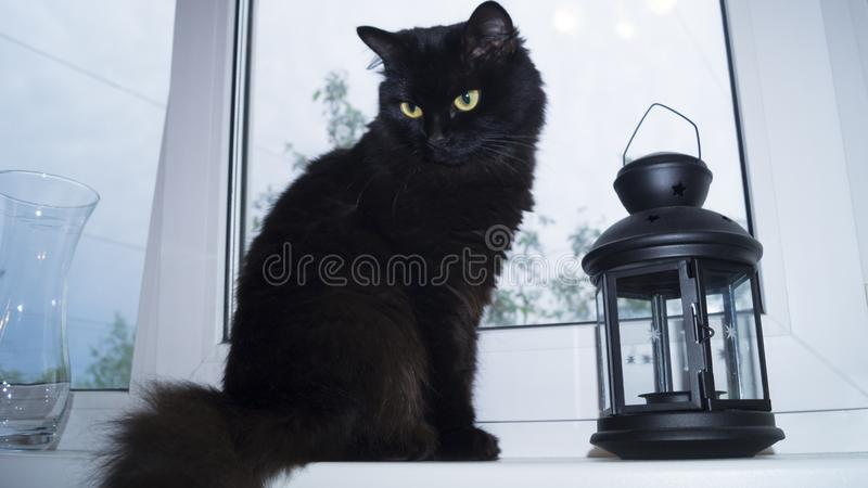 Black fluffy cat sitting on the windowsill. In the house next to the lantern stock photography