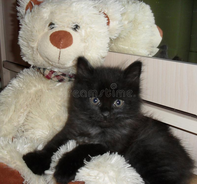 Black fluffy kitten sit with a white teddy bear stock photos