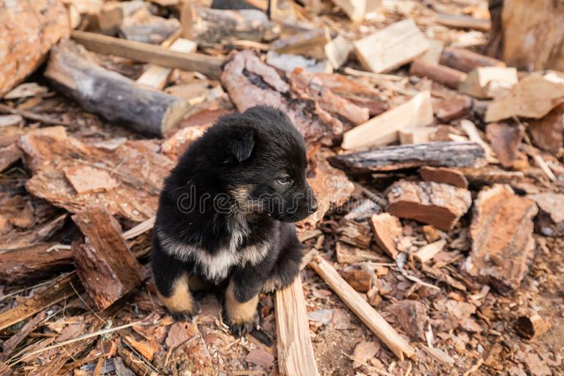 Black Fluffy Little Puppy Sitting In The Yard, Strewn With Sawdust. Black Fluffy Little Puppy Sitting In The Yard stock photos