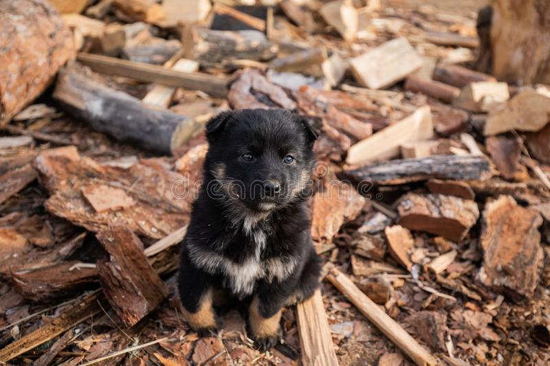 Black Fluffy Little Puppy royalty free stock images