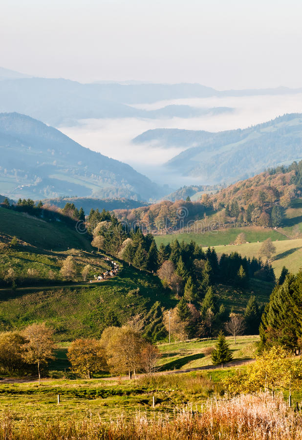 Black forest - Misty valley view royalty free stock photography