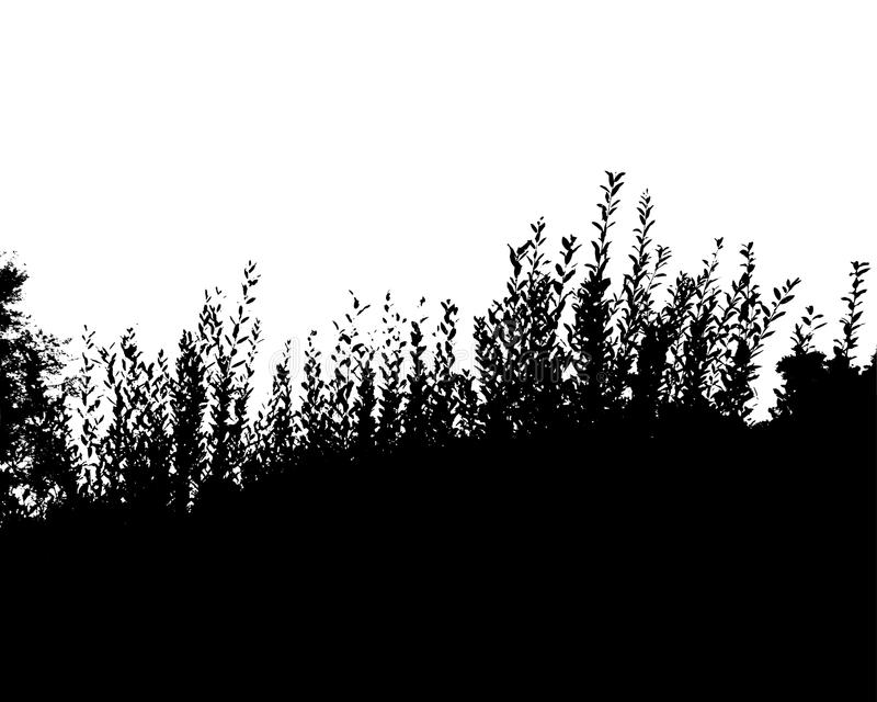 Black forest silhouette. Isolated on white background royalty free illustration