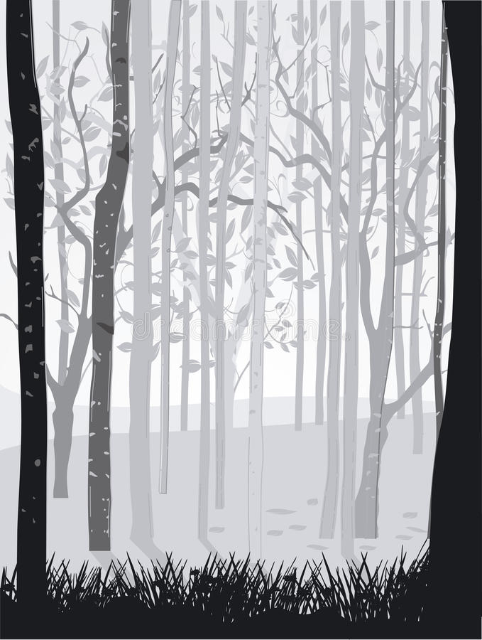 Download Black Forest White stock vector. Image of wildniss, fall - 22769977