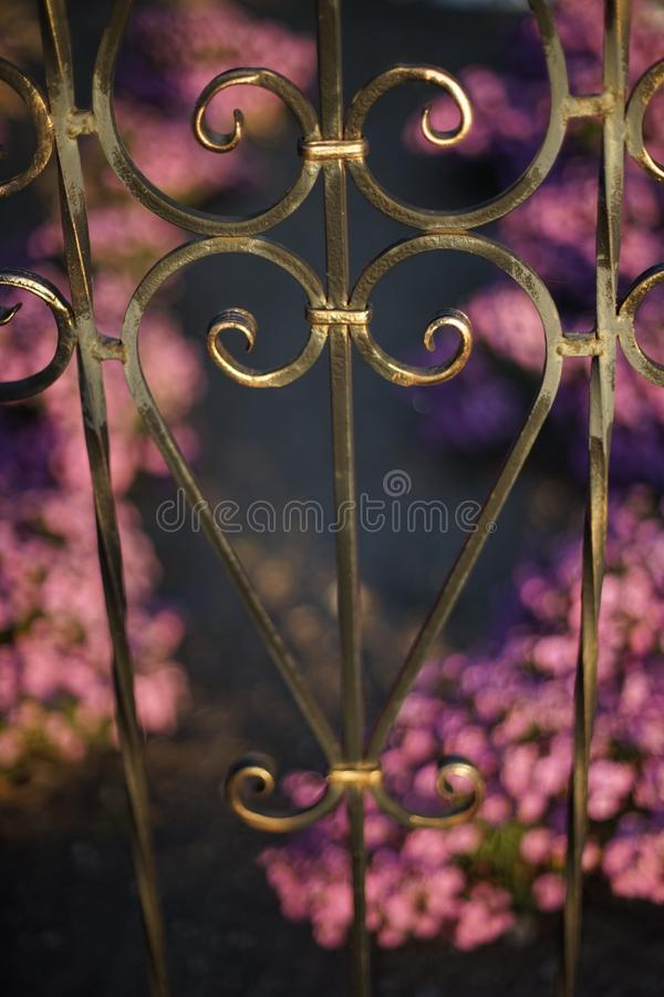Black forged fence against a background of purple flowers in the royalty free stock photography